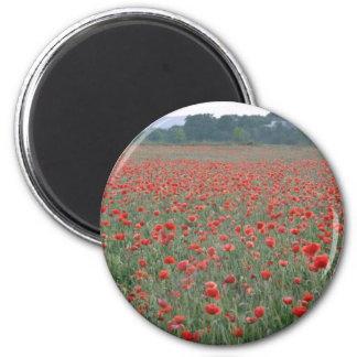 Red Poppy field, Kent, England flowers Fridge Magnets