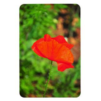 Red poppy rectangular photo magnet