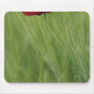 Red poppy flower among wheat crop, Tuscany, Mouse Mat