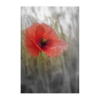 Red Poppy Flower Bohemian Acrylic Wall Art