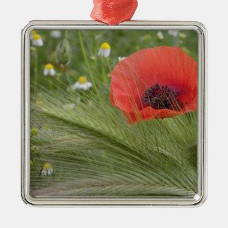 Red poppy flower, Tuscany, Italy Christmas Ornament