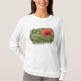 Red poppy flower, Tuscany, Italy T-Shirt