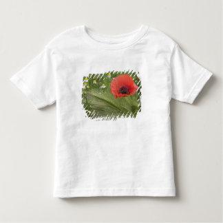 Red poppy flower, Tuscany, Italy Toddler T-Shirt