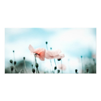Red Poppy Flowers Card