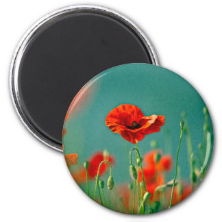 Red Poppy Flowers Magnets