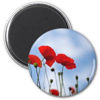 Red Poppy Flowers Refrigerator Magnet