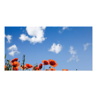 Red Poppy Flowers Personalized Photo Card