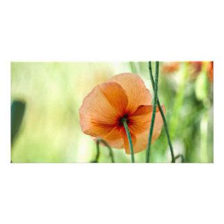 Red Poppy Flowers Customized Photo Card