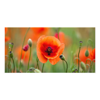 Red Poppy Flowers Photo Greeting Card
