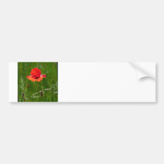 Red poppy in summer bumper sticker