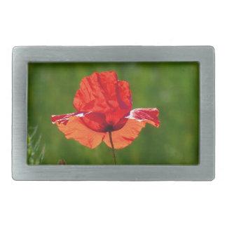 Red poppy in summer rectangular belt buckle