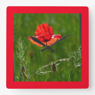 Red poppy in summer square wall clock
