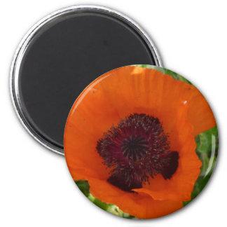 Red Poppy - Klatschmohn Magnete