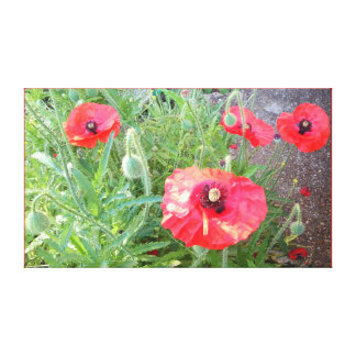 Red Poppy Photo 1164 Canvas Print