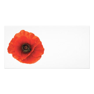Red Poppy Photo Card