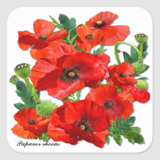 RED POPPY  ~ Square  Stickers