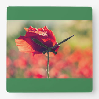 Red poppy square wall clock