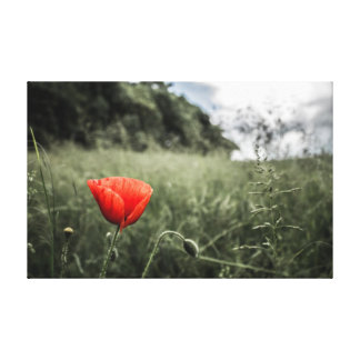 Red Poppy Stretched Canvas Print