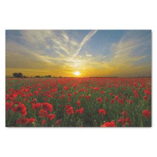 Red Poppy Sunset Tissue Paper