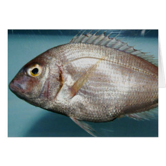 Red Porgy Greeting Card