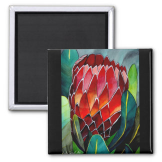 Red Protea watercolour flower original art Square Magnet