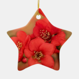 Red Quince Blossom Ceramic Star Decoration