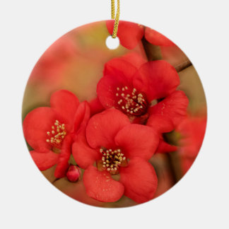Red Quince Blossom Round Ceramic Decoration