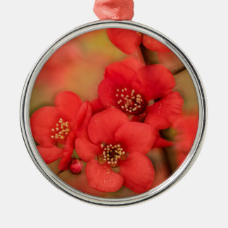 Red Quince Blossom Silver-Colored Round Decoration