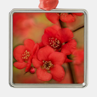 Red Quince Blossom Silver-Colored Square Decoration