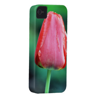Red Rain Tulip Photography iPhone 4 Cases