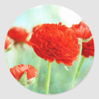 Red Ranunculus Flowers Classic Round Sticker