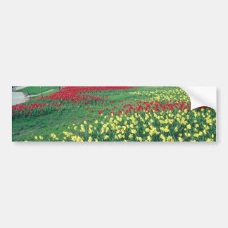 Red Red and white tulips, Kew Gardens flowers Bumper Stickers