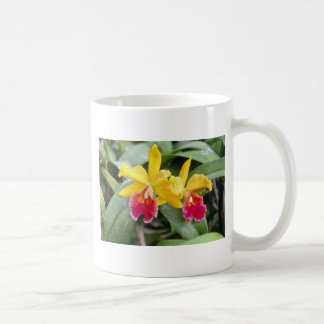 Red Red and yellow cattleya orchid flowers Mug