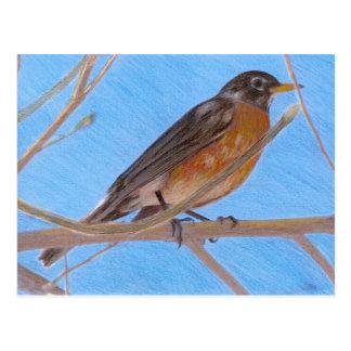 Red Robin Fine Art Nature Postcard