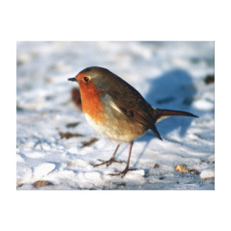 Red Robin in the snow Canvas Print