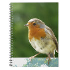 Red Robin Notebook