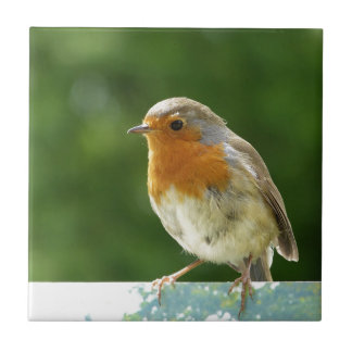 Red Robin Small Square Tile