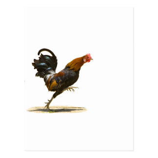 Red Rooster Postcard