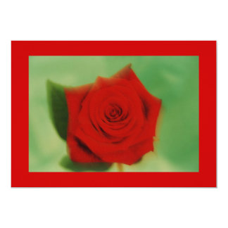 red rose 1 13 cm x 18 cm invitation card