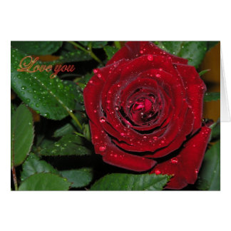 Red Rose #2 Greeting Cards