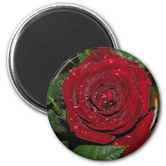 Red Rose #2 Refrigerator Magnets