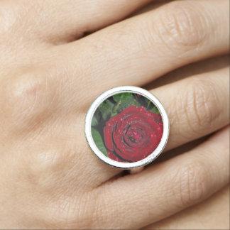 Red Rose #2
