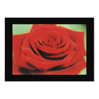red rose 3 13 cm x 18 cm invitation card