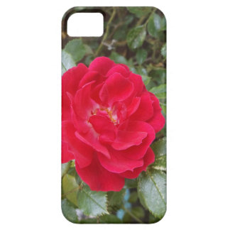 Red Rose Barely There iPhone 5 Case