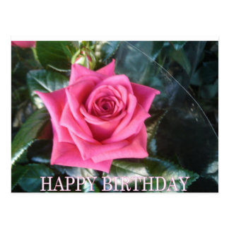 Red rose birthday greeting post cards