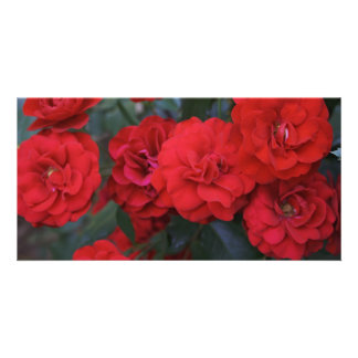 Red Rose Blossoms - flower photography Personalised Photo Card
