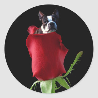 Red rose Boston terrier stickers