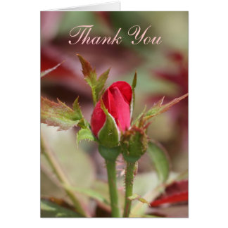Red Rose Buds Thank You card