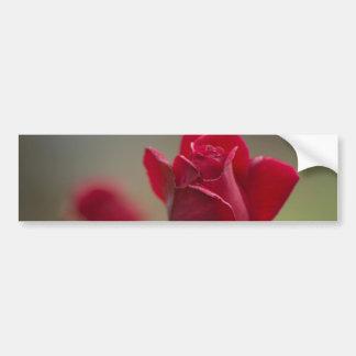 Red Rose Bumper Sticker