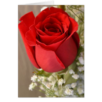 Red Rose Greeting Cards